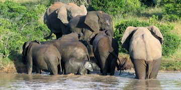 Woodbury Tented Camp Elephant Herd